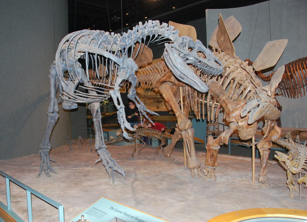 India Wood's allosaurus at the Denver Museum of Nature and Science, 1995