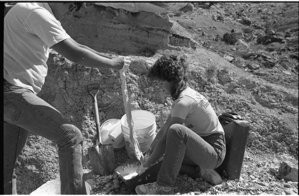 India Wood and Jim Lindsey preparing a plaster field cast for one of the DMNS allosaurus bones.