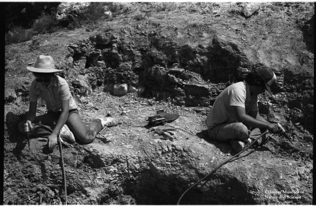 India Wood and Jim Lindsey using pneumatic hammers to dig up the DMNS allosaurus.