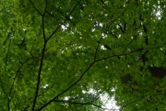 Trees (or green starfish on branches)