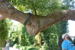 Cinnamon tree at Borromeo Palace in Stresa, Italy
