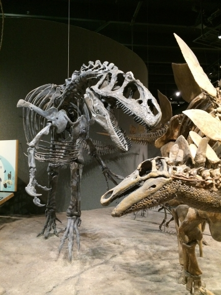 My allosaurus attacking a stegosaurus at the Denver Museum of Nature and Science, 1995.